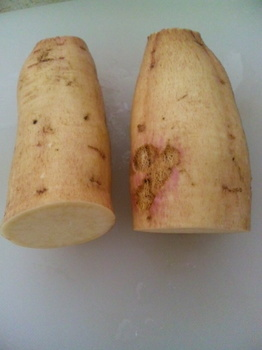 干し芋用のサツマイモ