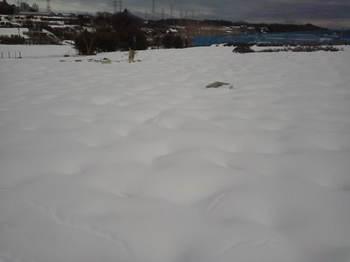 大雪となった後のG2の様子.JPG